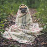 +2℃で寒さを感じさせないおすすめ毛布